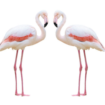 Real-life Flamingos removable wall stickers