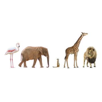 Safari Animals removable wall stickers facing right