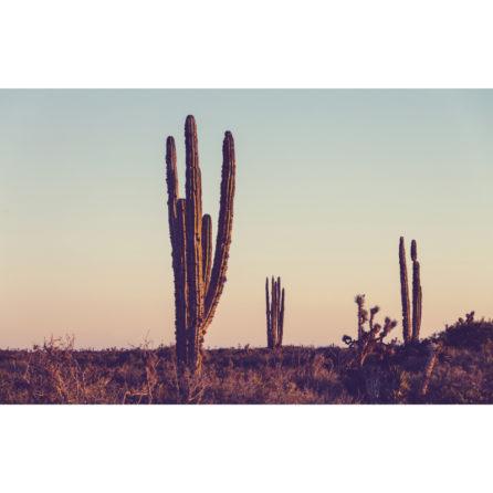 Cactus mural 3