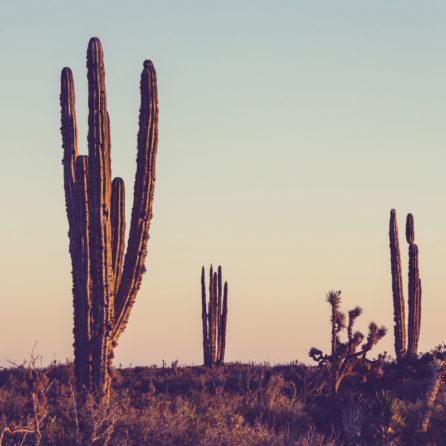 Cactus mural 2