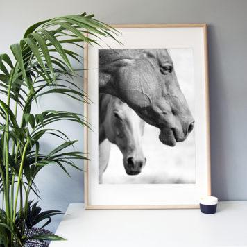 "Frame It Art – Horses Two seen in an Ikea ""Ribba"" frame"
