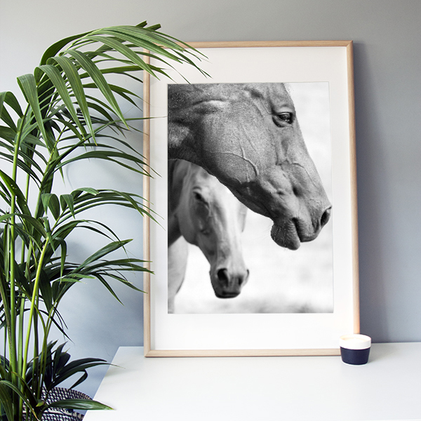 "Frame It Art – Horses Two seen in an Ikea ""Ribba"" frame"