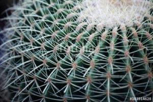 Custom Texture Mural Image - Cactus Macro