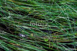 Custom Texture Mural Image - Grass