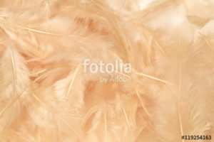 Custom Texture Mural Image - Feathers