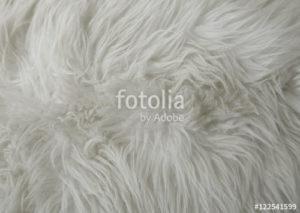 Custom Texture Mural Image - White Fur