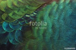 Custom Texture Mural Image - Peacock