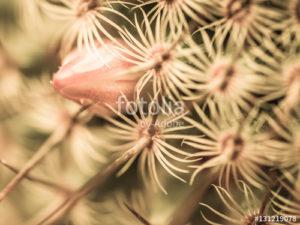 Custom Texture Mural Image - Cactus Bud