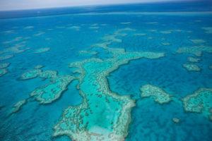 Australia Mural Image - Great Barrier Reef