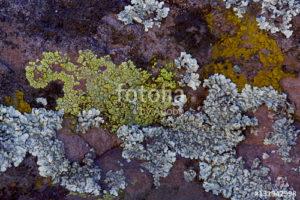 Custom Texture Mural Image - Lichen