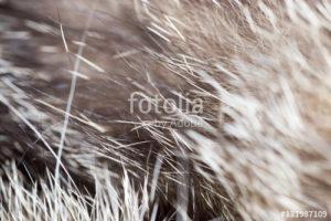 Custom Texture Mural Image - Fur