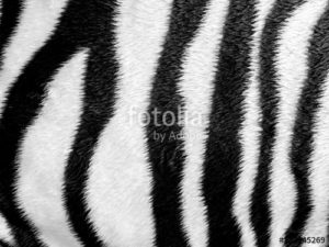 Custom Texture Mural Image - Zebra