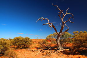 Australia Mural Image - Kings Canyon