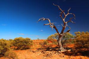 Australia Mural Image - Kings Canyon