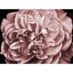 Blush Rose full mural image