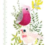 Native-birds-Height-Chart-1