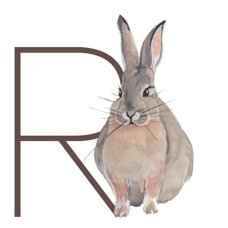 animal letters R