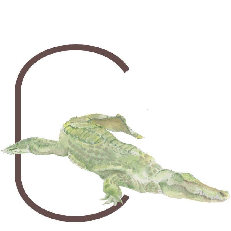 animal letters C
