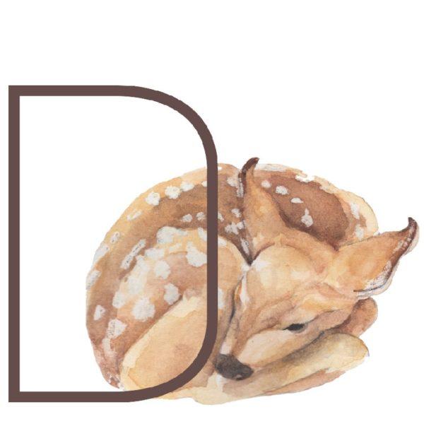 animal letters D