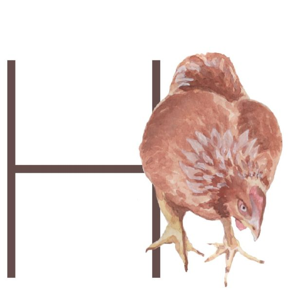 animal letters H