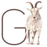 g_for_goat