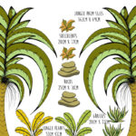Jungle Palm_Lifestyle_Sizes