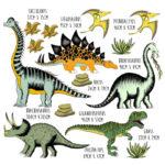 Super Sized Dinosaur_Lifestyle_Sizes
